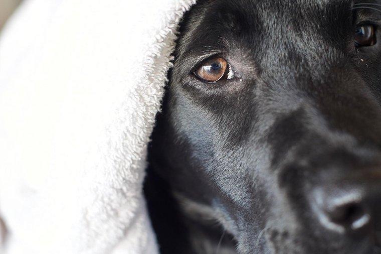 Hund mit Handtuch