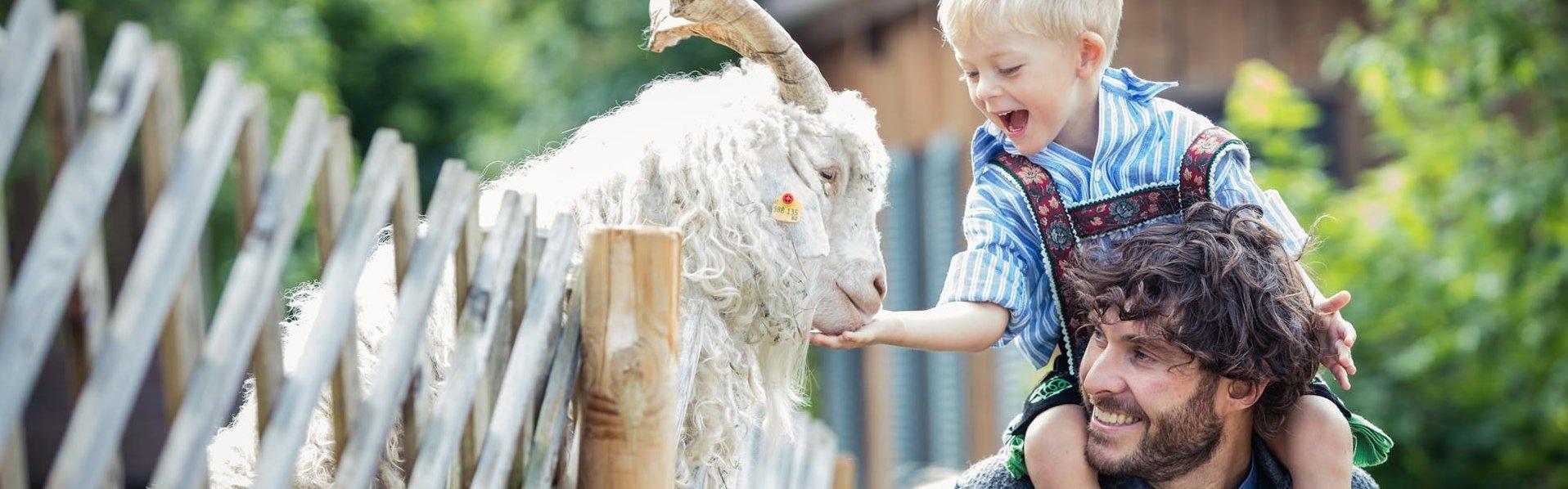 Kind füttert Ziegenbock